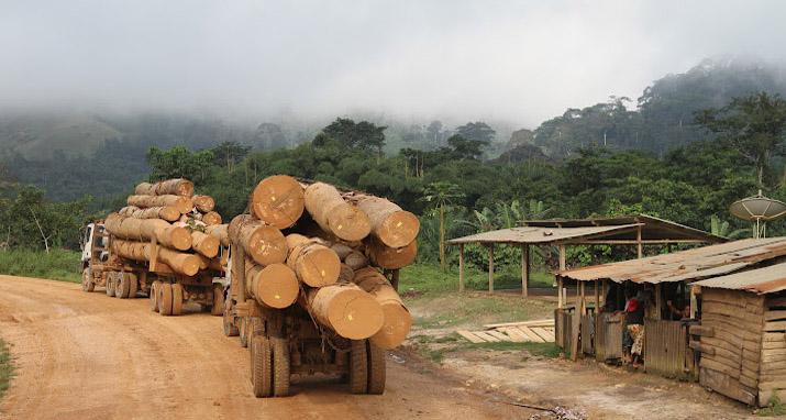 Logging, Republic of Congo