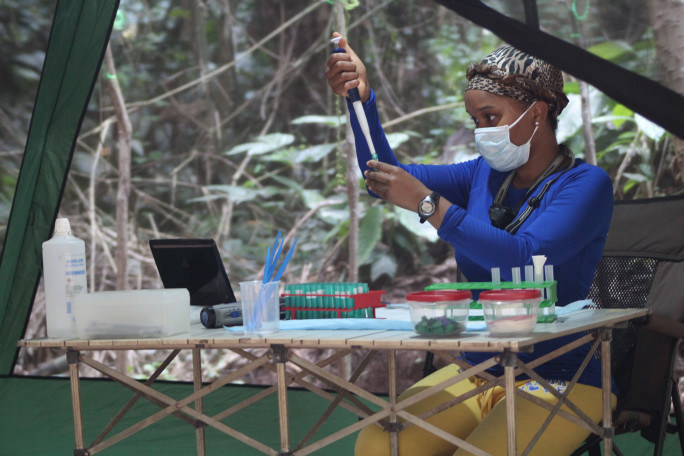 Graduate Students Kristena Cooksey collecting samples for research in the Goualougo Triangle in the Republic of Congo