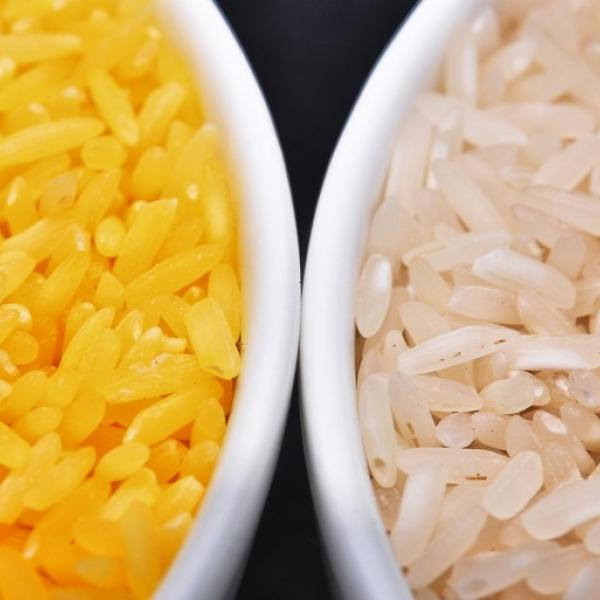 """Golden Rice"" with Glenn Stone"