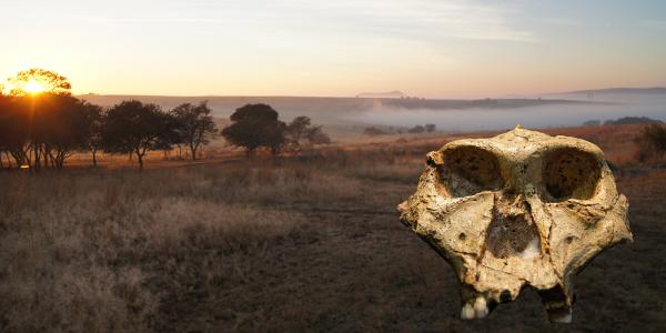 Dating the 'Cradle': New timeline sheds light on early human history